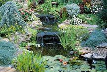 Vatten trädgård