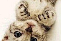 kittycat♡