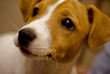 I love Jack Russell I want Jack Russel