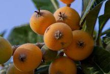 Orchard Plants