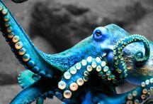 octopuses / by Sydney Vegezzi