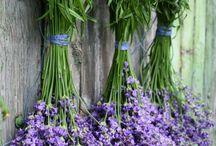Wonderful Lavender