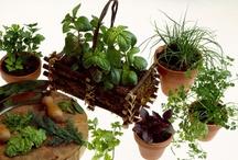 gardening / by Lori Jolley