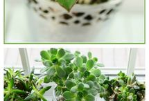 Plant tips / by Holly Perkins