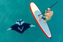 paddle surf with animals