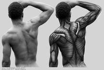 anatomia espalda