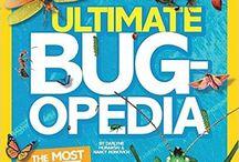 Bugs / Περισσότερα στο http://anoixtestaxeis.weebly.com/