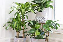 para ricones plantas de interior