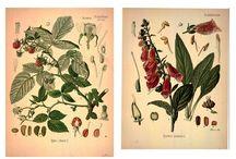 Pflanzen Abbildungen