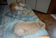 Gatti Kitten / tutto sul gatto e oltre