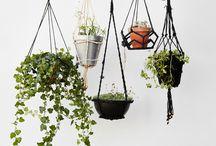 식물 인테링ㅓ
