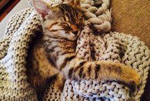 Chickpea the Kitten