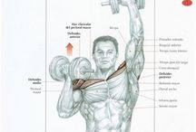 Ejercicios para ejercitar hombros / Fitness