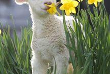 Spring **Lente**