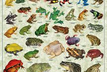 Amphibians / Toads and frogs - a key environmental indicator! / by National Garden Clubs, Inc.