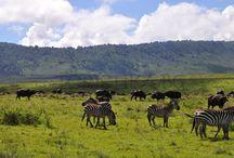 Африка (Танзания)