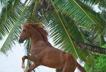 My Favorite horses ! / My Horses ! / by Jocelynn Guerrero