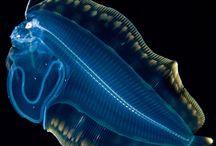 Deep sea creatures  -  aliens :)