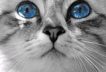 Precious little furry kitty's