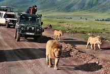 Viaggi Africa