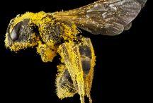 macro bee portraits
