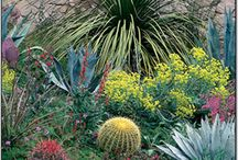 Rockery and Desert Garden