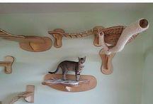 kitty cat ideen