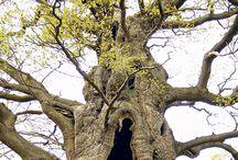 Natur - træ