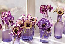 Pansies! / by Kathy Smith