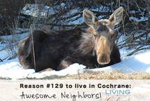 """Cochrane, Alberta / A local Realtor with Royal LePage Allstar Real Estate, Debbie Leah is selling Cochrane! When you add great people & a great community you find the perfect home! """"Living in Cochrane"""" is her social media brand where she celebrates all things Cochrane & where she markets her current property listings."""