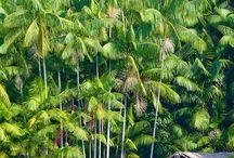 Flora / De Carthagène à Manaus