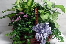 Fowler's Plant Arrengements