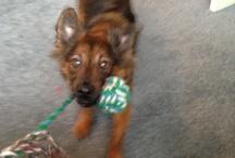 Gonzo / The dog :)