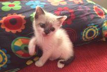 Laya / La mascota de la redacción de TreceBits.com