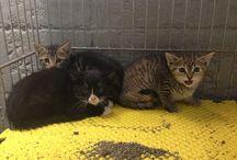 Super Kittens!