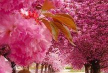 """A natureza são obras de nosso pai """"Deus""""."""