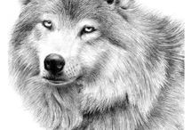 Dog / Drawing