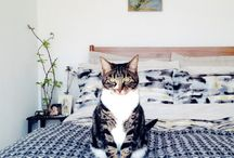 Domestic Cats / domestic cats, their home and friends. / by Jacqueline Janssen