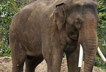 My Wonder Zoo : The Troops of Colonel Hathi ! / Animals