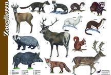 Herkenning dieren, planten enz.