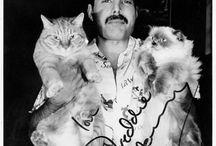 VIP con gatti