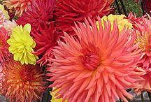 Flower Farm / by Laura Bigbee-Fott