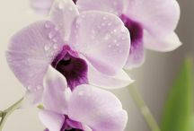 Orchid / My lovely flowers