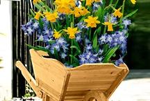 Collezioni di fiori