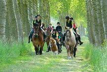 Jaarrit 2013 / In 2013 reden wij een prachtige rit in de omgeving van Schoondijke