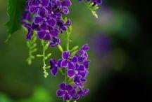 plants for Brisbane