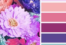 Color studies & color palette