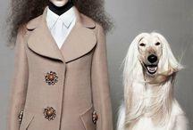 Animal fashion shoot