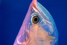 créature sous marine