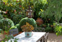 Home - Courtyard/Garden Ideas